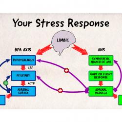 Stress-Response2